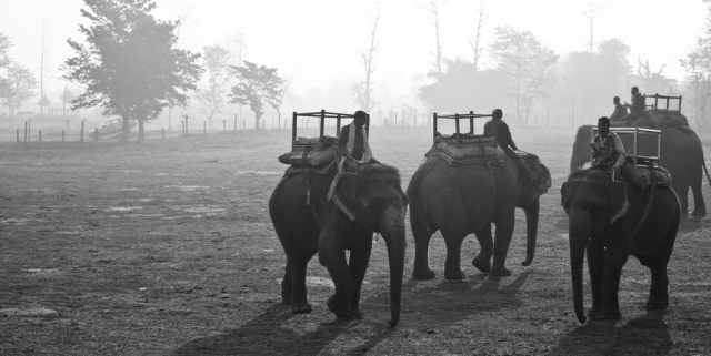 Parc national de Chitawan