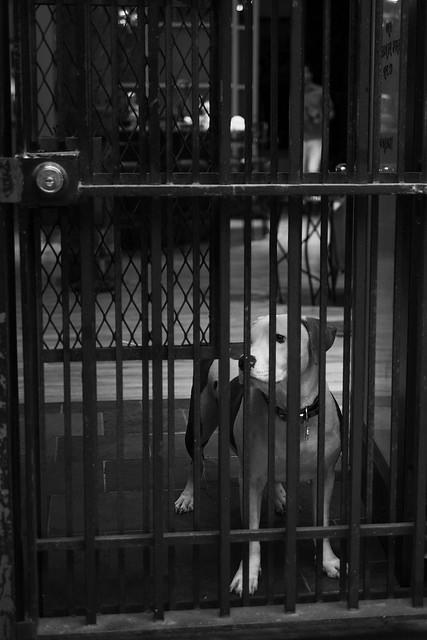 Chien derrière des barreaux (New York)